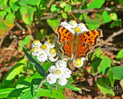 Photograph - Butterfly And Flower by Jack Moskovita