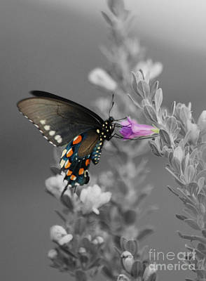 Butterfly And Flower Art Print by Jim Wright