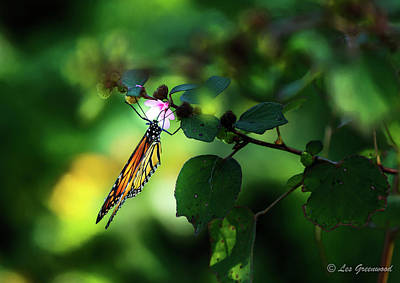 Photograph - Butterfly And Flower by Les Greenwood