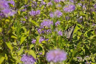 Photograph - Butterfly And Flowers by Photography by Tiwago