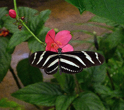 Photograph - Butterfly And Pink Flower Blur by Laura Greco