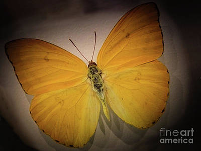 Photograph - Butterfly And Shadows by Steven Parker