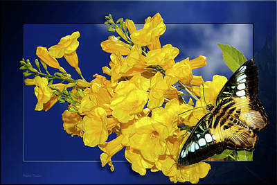 Photograph - Butterfly And Yellow Bells by Phyllis Denton