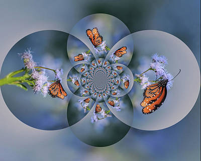 Photograph - Butterfly Art 1072 by Tam Ryan