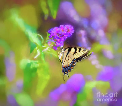 Photograph - Butterfly Art - Eastern Tiger Swallowtail by Kerri Farley