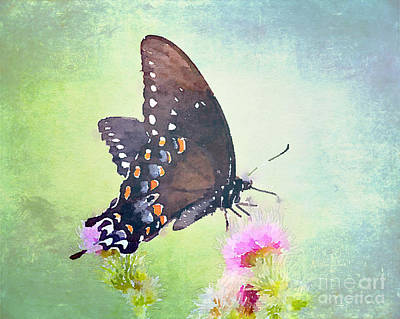 Photograph - Butterfly Art - In The Thistle by Kerri Farley