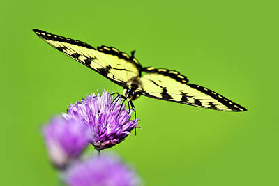 Photograph - Butterfly Art Of Balance by Christina Rollo