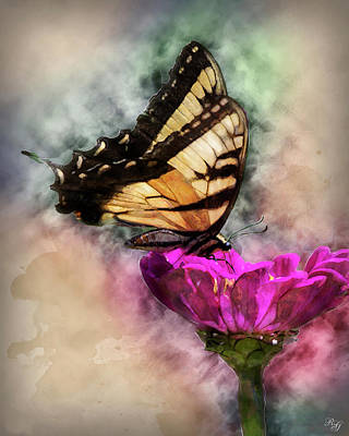 Photograph - Butterfly Art by Ron Grafe