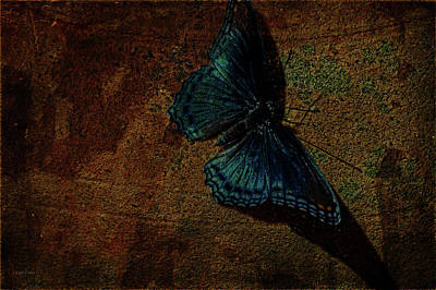 Photograph - Butterfly Art Suns Cast by Lesa Fine