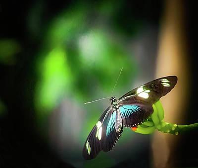 Photograph - Butterfly At Cleveland Botanical Gardens by Richard Goldman