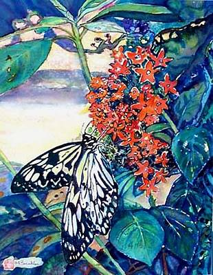 Butterfly At Mac Art Print by Norma Boeckler