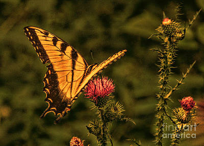 Butterfly At Sunset Art Print by Kathy Liebrum Bailey