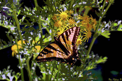 Photograph - Butterfly At Wilson Creek #4 Enhanced Image by Ben Upham III
