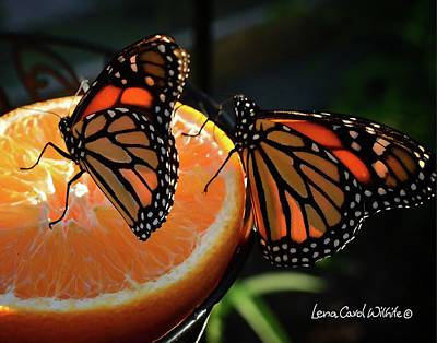 Photograph - Butterfly Attraction by Lena Wilhite