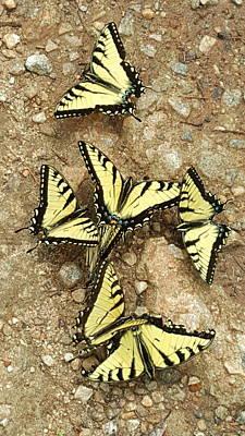 Photograph - Butterfly Ballroom by Brenda Stevens Fanning
