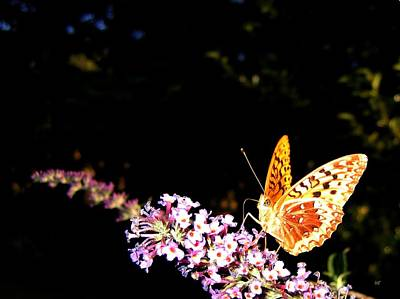 Banquet Photograph - Butterfly Banquet 1 by Will Borden