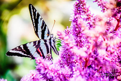 Photograph - Butterfly Beautiful  by Peggy Franz
