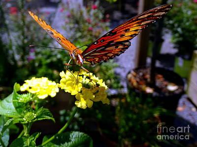 Photograph - Butterfly Beauty #1 by Ed Weidman