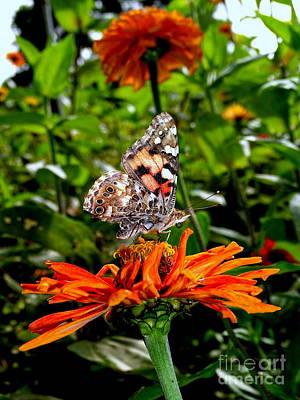Photograph - Butterfly Beauty #12 by Ed Weidman