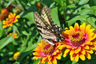 Butterfly Beauty Art Print by Dion Baker
