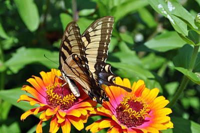 Butterfly Beauty II Art Print by Elizabeth Del Rosario-Baker