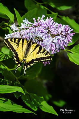 Photograph - Butterfly Beauty by Peg Runyan