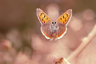 Elf Photograph - Butterfly Beauty by Roeselien Raimond
