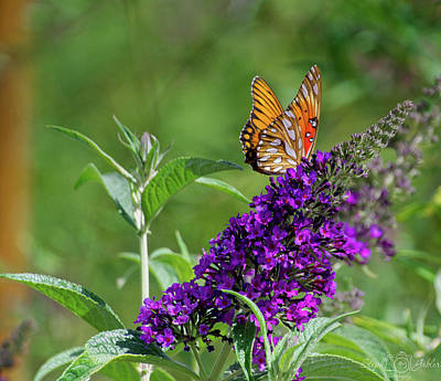 Photograph - Butterfly Beauty by Steph Gabler