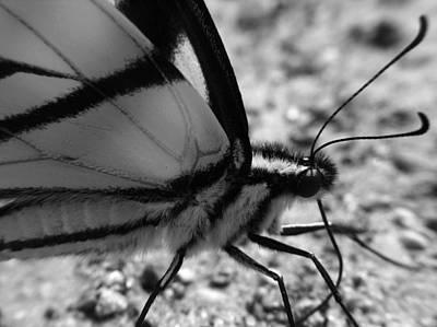 Digital Art - Butterfly by Belinda Cox