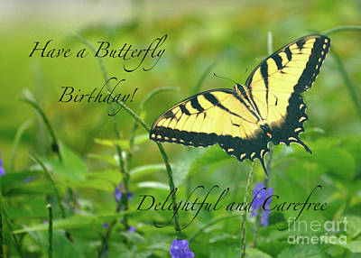 Photograph - Butterfly Birthday Card by Carol Groenen