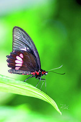 Photograph - Black Red Butterfly by Meta Gatschenberger