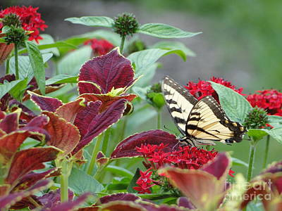 Photograph - Butterfly Blessing The Gardens by Barbie Corbett-Newmin