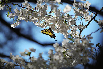 Butterfly Blossom Print by Nathan Grisham