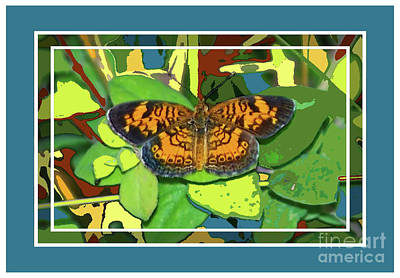 Photograph - Butterfly Blue Border by Shirley Moravec