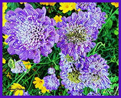 Digital Art - Butterfly Blue Scabious  by MaryLee Parker
