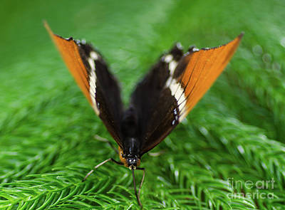 Photograph - Butterfly Bokeh by Nick Boren