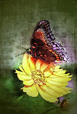 Digital Art - Butterfly by Bonnie Willis