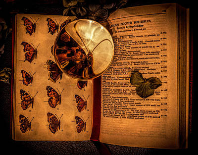 Photograph - Butterfly Book by Lilia D