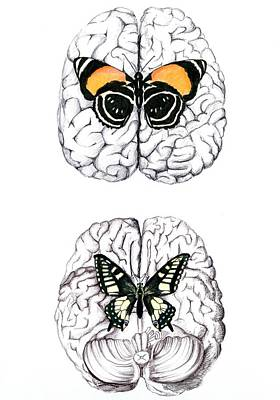 Neuroscience Painting - Butterfly Brains by Emma Foss