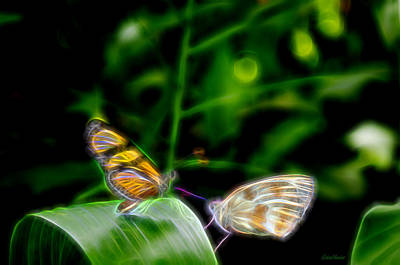Photograph - Butterfly Buddies by Ericamaxine Price