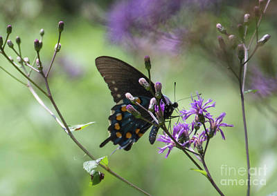 Photograph - Butterfly, Buds And Petals by Judy Hall-Folde