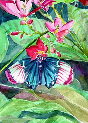 Franklin Park Conservatory Drawing - Butterfly Buffet by Mindy Newman