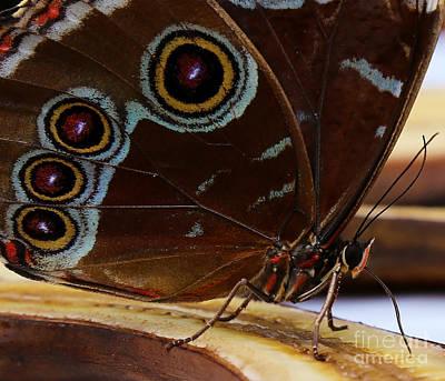 Photograph - Butterfly Bulls-eye by Sue Harper