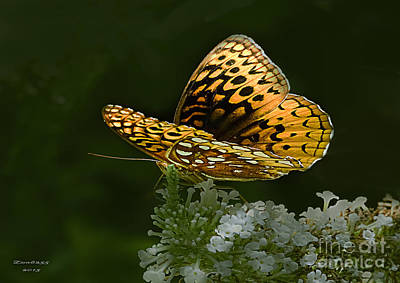 Photograph - Butterfly Bush Butterfly Included by Melissa Messick