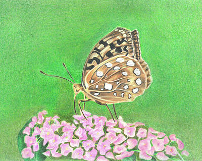 Drawing - Butterfly Bush by Troy Levesque