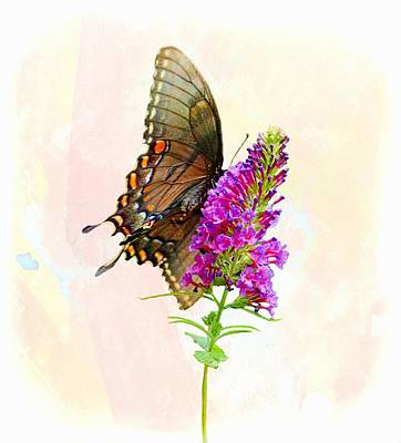 Photograph - Butterfly Bush Visitor by Joe Duket