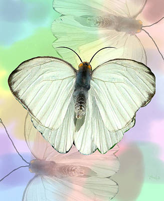 Butterfly, Butterfly Art Print by Rosalie Scanlon
