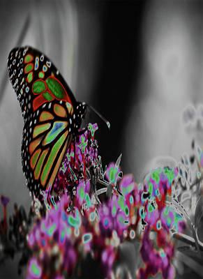 Photograph - Butterfly Butterfly by Susan Garrett