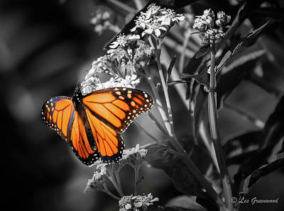 Photograph - Butterfly Bw by Les Greenwood