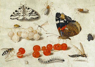 Nature Study Painting - Butterfly, Caterpillar, Moth, Insects And Currants by Jan Van Kessel